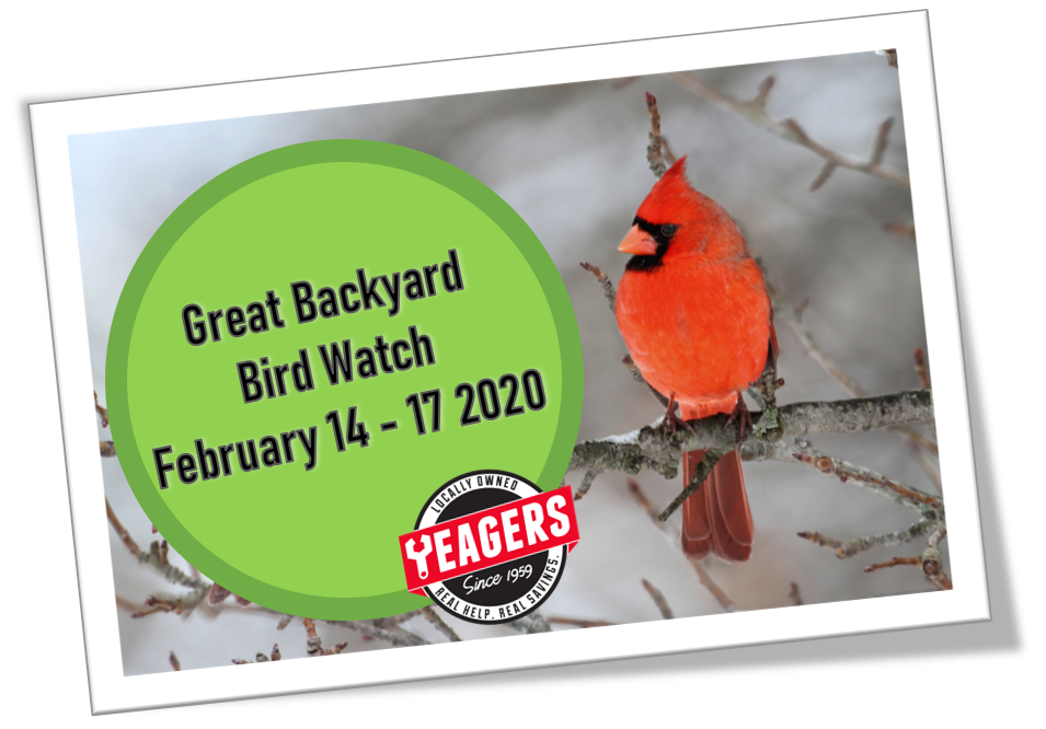 Great Backyard Bird Count   Yeagers Ace Hardware